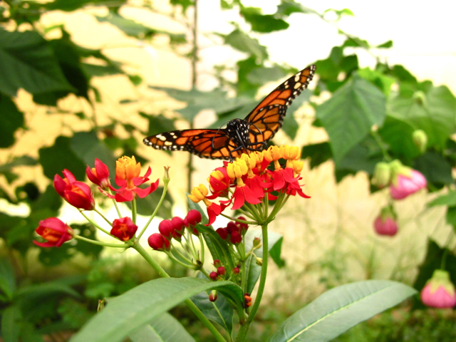 Nice Butterfly at Bogota's Botanical Garden