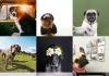 Best Dogs to Follow on Instagram