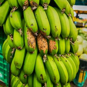 Bananas at a market in San Jose, Costa Rica
