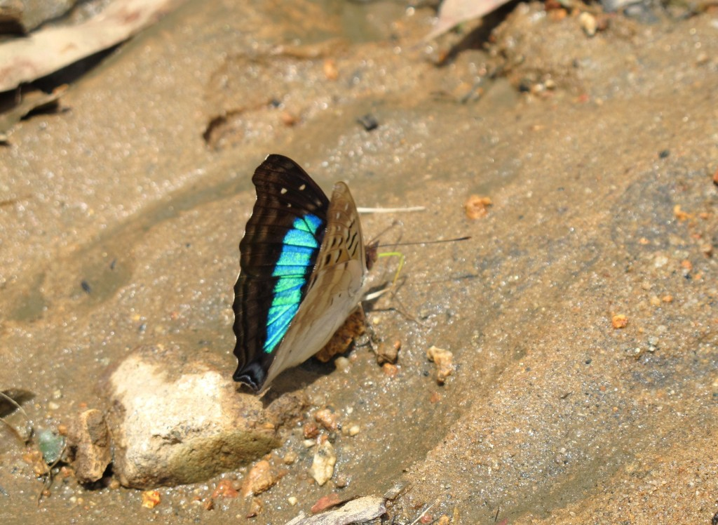 A shy butterfly