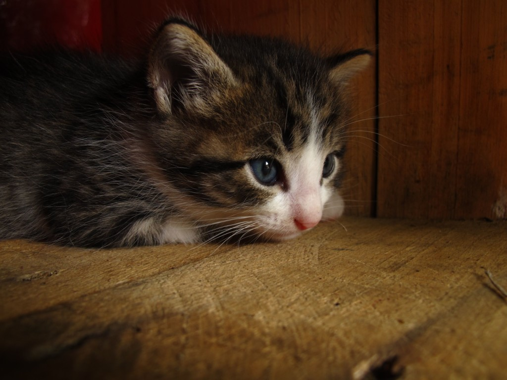 Survivor, the only kitten left