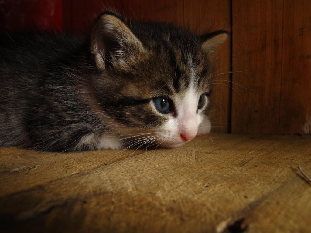 Survivor, the only kitten left