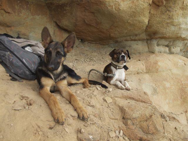 Dogs chilling in La Mojarra