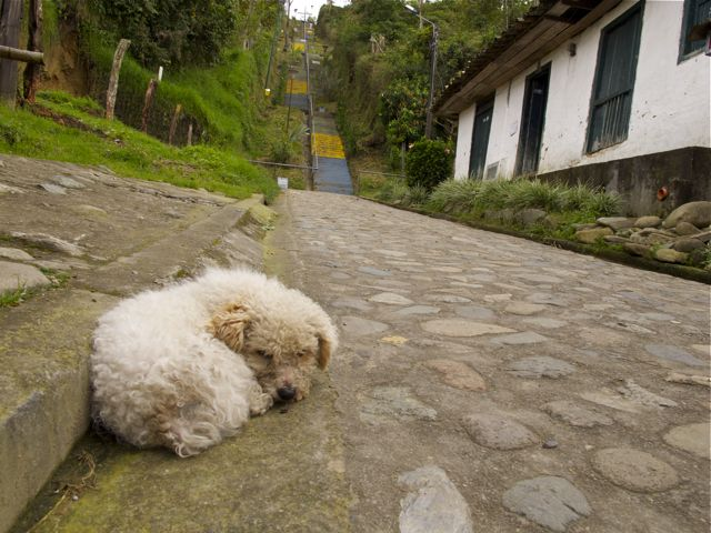 Dog sleeping in Salento