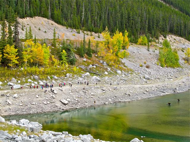 Canadian Wildlife: moose