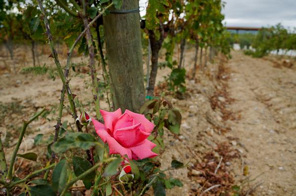 Wine Tasting in Girona: La Vinyeta winery in Empordà