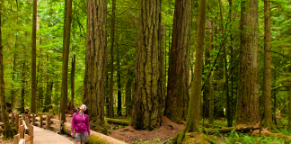 Strolling in Cathedral Grove, Vancouver Island BC (Canada)