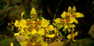 Orchids in Quito, Ecuador