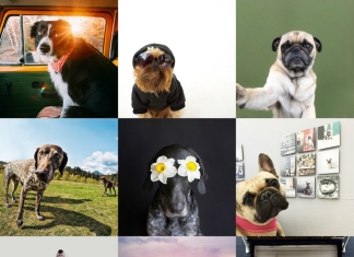 Best Dogs to Follow on Instagram