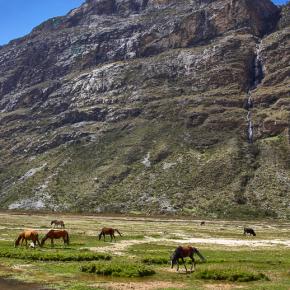 Horses at Huascarán National Park in Peru