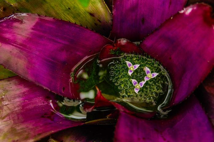 Plant at Quito's Botanical Garden in Ecuador