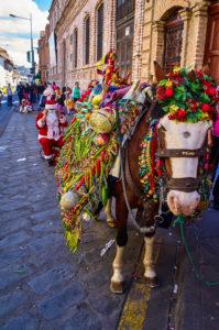 Horse at the Pase del Niño parade in Cuenca, Ecuador