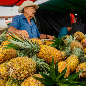 Selling pineapples at a market in San Jose, Costa Rica
