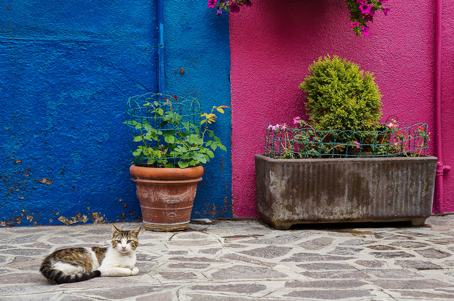 Lazy cat in Burano, Italy